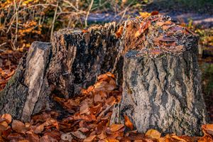 Concept nature : The tree trunk