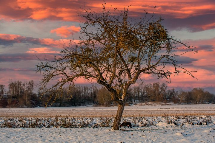 The lonely tree - by Photoart-Naegele