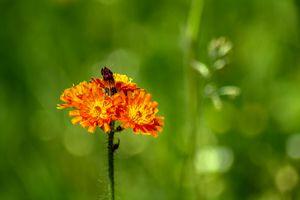 Flora : Enjoy nature