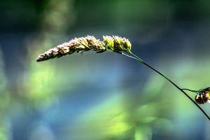 Enjoy nature : Growth