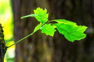 Natur geniessen : Neuer trieb