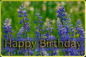 Concept greetings : Happy Birthday