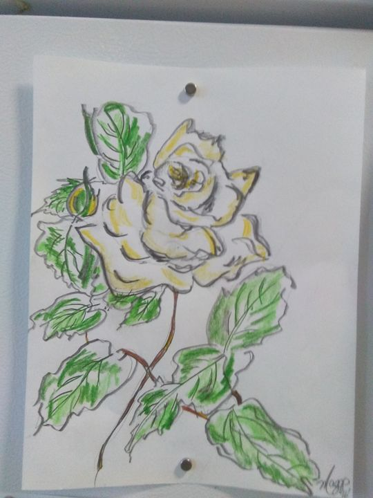 Yellow rose - Maggs