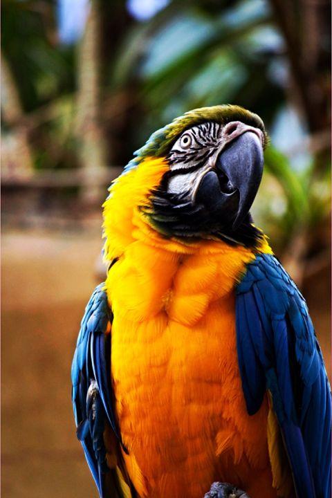 Parrot - Rikki Lea's Photography