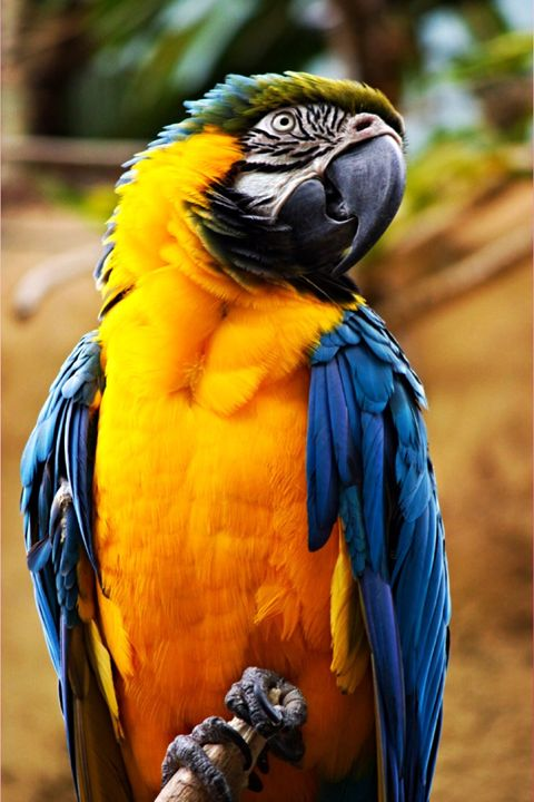 Parrot 2 - Rikki Lea's Photography
