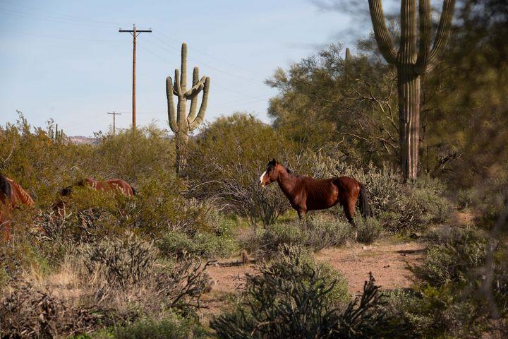 Chestnut Stallion - JM Morrison Photography