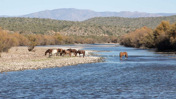 Horses in the river - JM Morrison Photography
