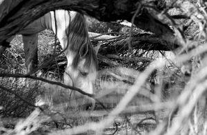White Stallion eating in brush