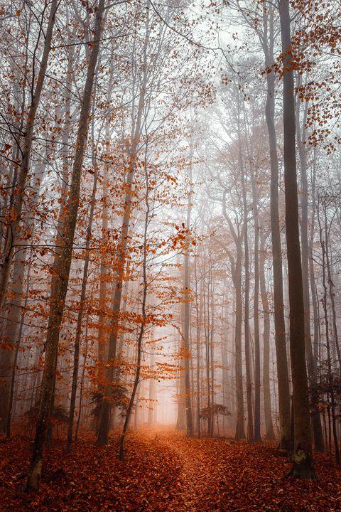 Brume - Shambhala Zen Photographies