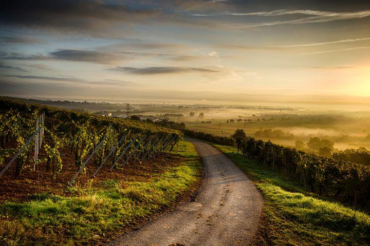 View to Molsheim - Shambhala Zen Photographies
