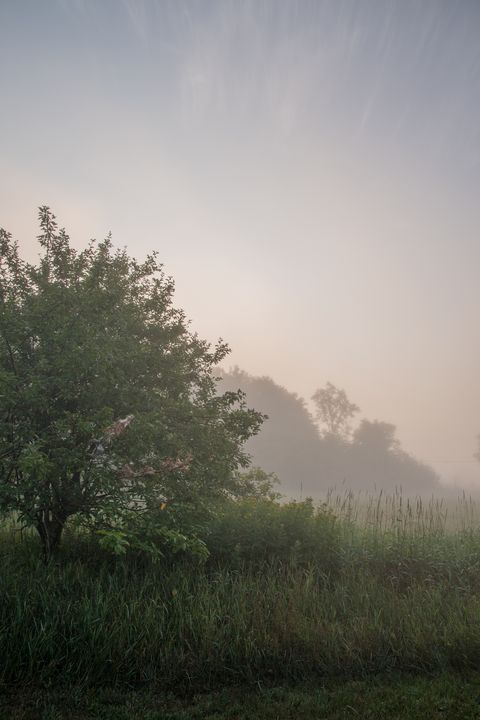 Pasture and trees in morning fog - Sublimage