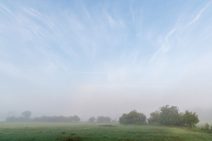 Pasture and trees in morning mist - Sublimage