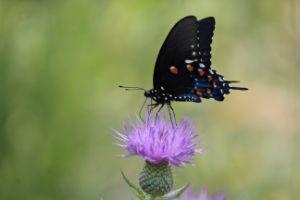 Blue Butterfly Beauty - Nina La Marca Artistic Photography