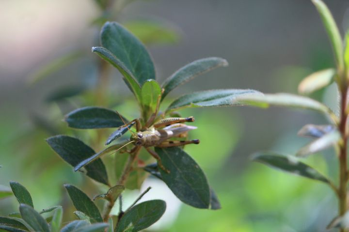 Grasshopper Greetings - Nina La Marca Artistic Photography