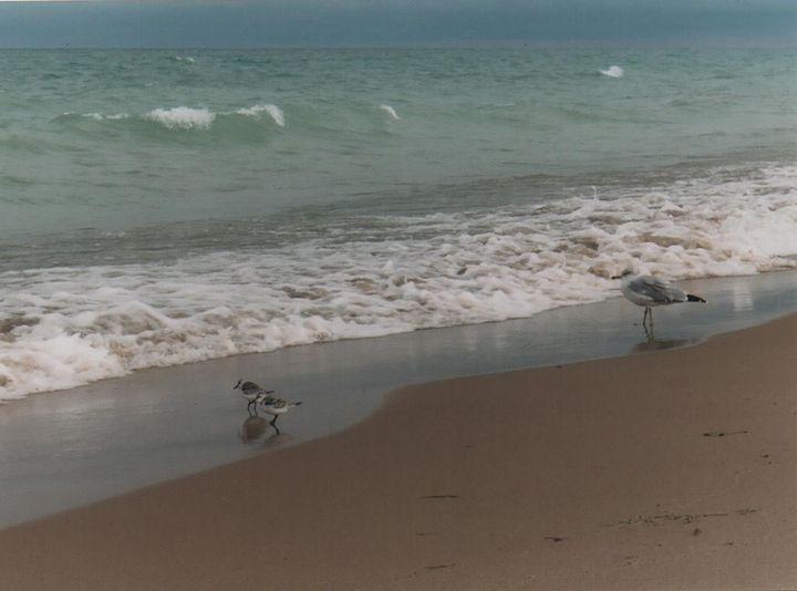 Baby Gulls Testing the Water - Nina La Marca, Artist's Photography