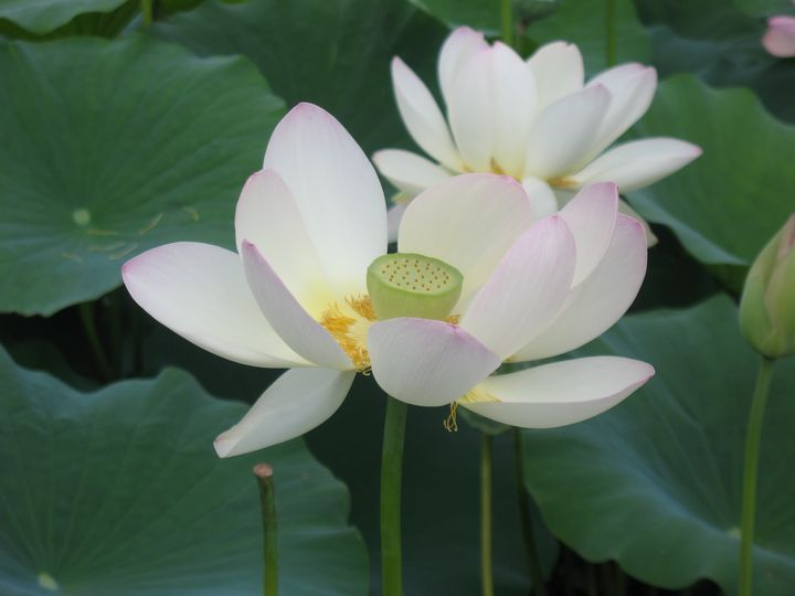 Lovely Water Lilies - Nina La Marca, Artist's Photography on Artpal