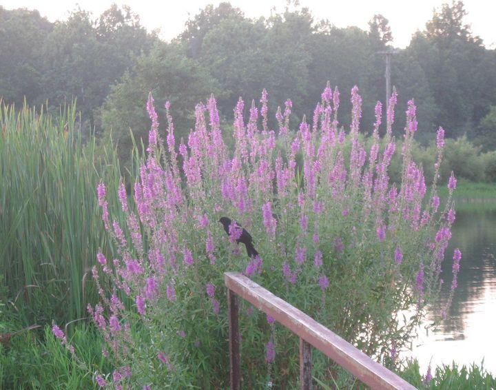Black Bird in Blooming Bush - Nina La Marca Artistic Photography