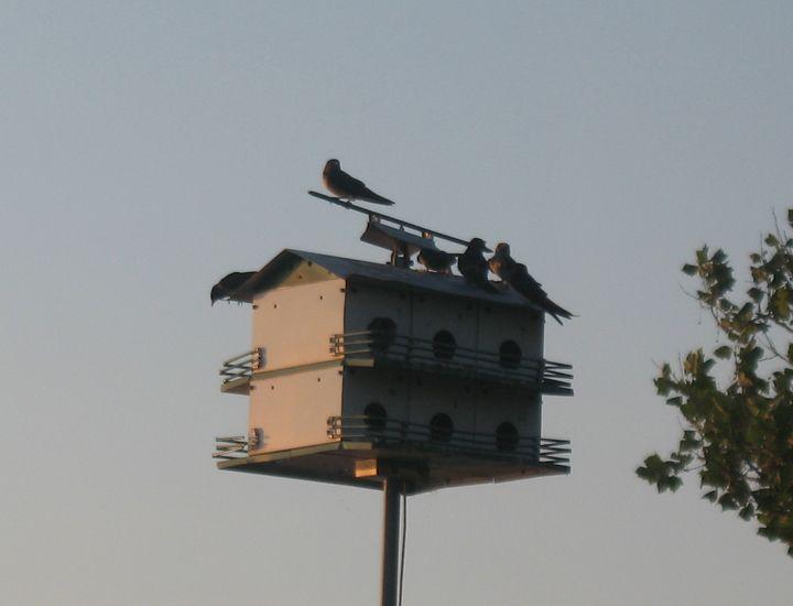 Sparrows at Sun Set - Nina La Marca, Artist's Photography