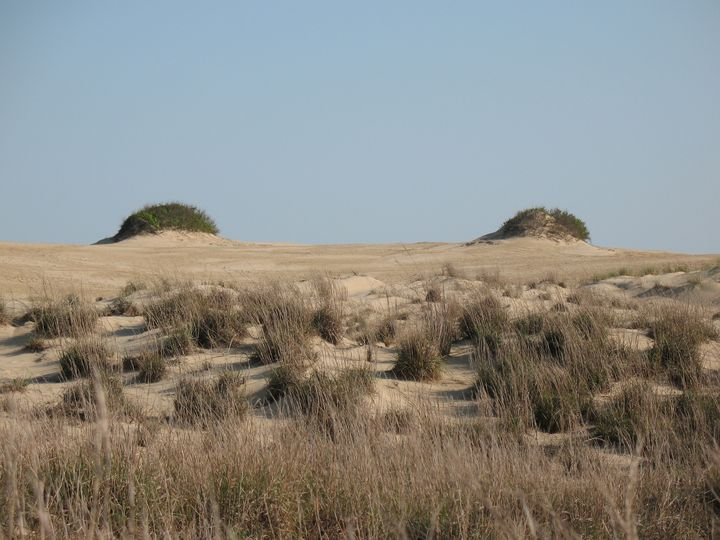 Sand Dunes Outer Banks - Collectors Art from N. La Marca