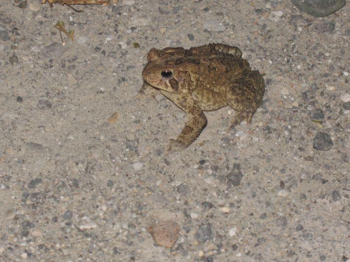 Froggy Friend - Nina La Marca Artistic Photography