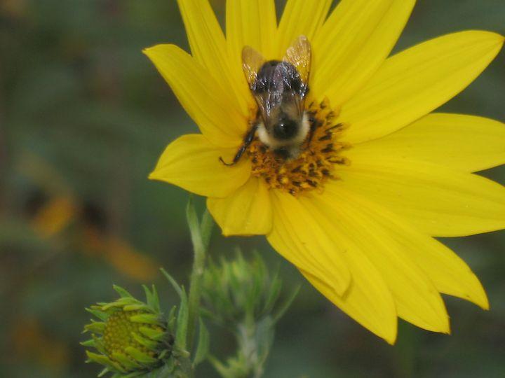 Busy Bumble Bee - Nina La Marca Artistic Photography