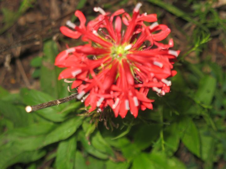 Wildflower Bloom - Nina La Marca, Artist's Photography