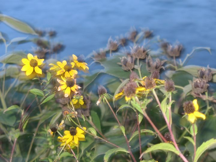 Wildflowers Lakeside - Nina La Marca, Artist's Photography