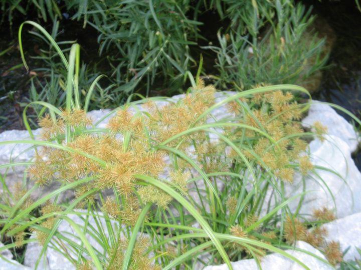 Flora at Eagle Creek - Nina La Marca Artistic Photography