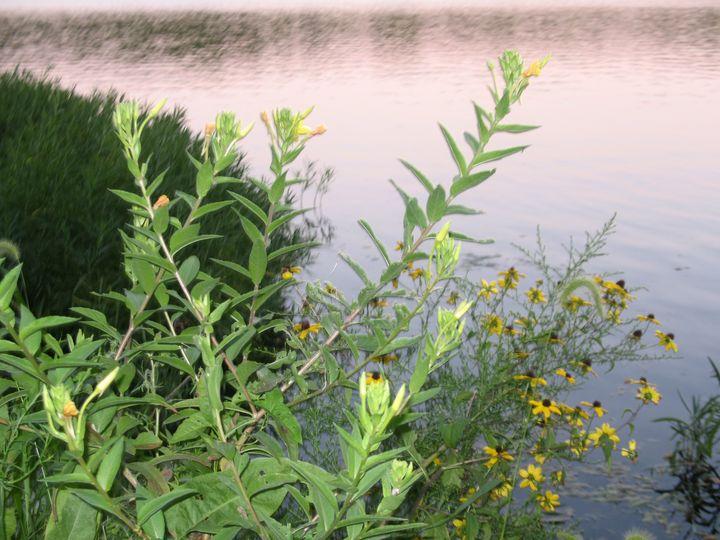 Wildflowers at Eagle Creek - Nina La Marca Artistic Photography