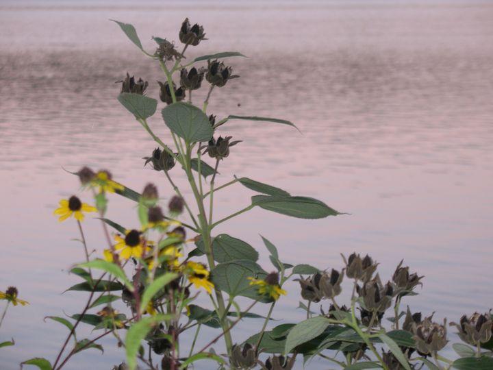 Wildflower Sunset - Nina La Marca, Artist's Photography