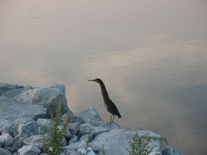 Green Heron After Fishing - Nina La Marca, Artist's Photography