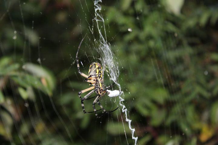 Spider's Snack - Nina La Marca, Artist's Photography
