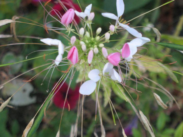 September Wildflower - Nina La Marca, Artist's Photography