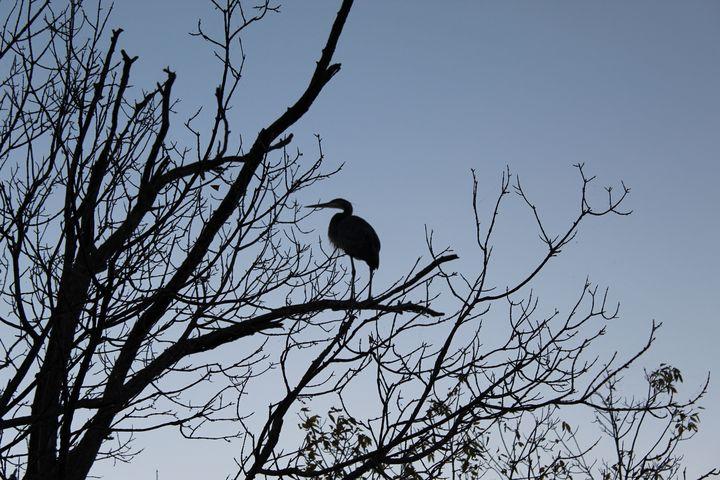 Blue Heron Overlooks Eagle Creek - Nina La Marca Artistic Photography