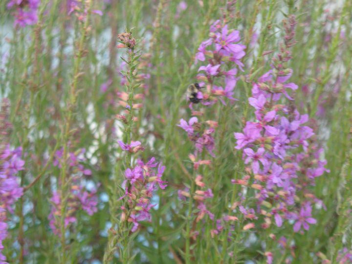 Bee Essential - Nina La Marca Artistic Photography