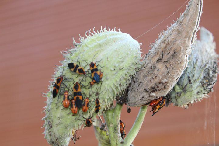 Beetlemania Two - Nina La Marca, Artist's Photography on Artpal