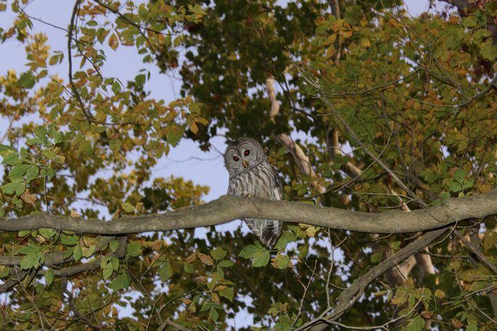 Greeting a Barred Owl - Nina La Marca, Artist's Photography