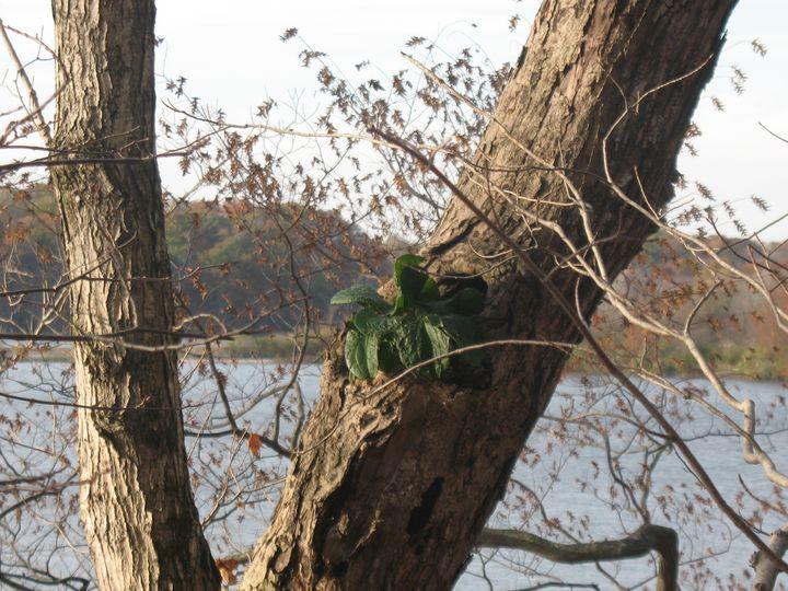 Life Sprouts on Dying Tree November - Nina La Marca Artistic Photography