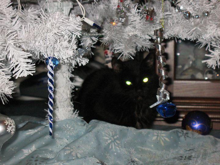 Kitty Christmas - Nina La Marca, Artist's Photography on Artpal