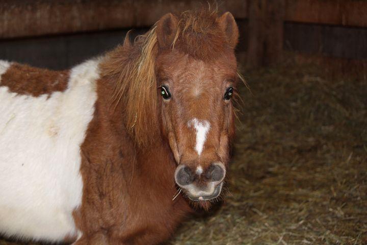 Greeting a Pony - Nina La Marca, Artist's Photography on Artpal