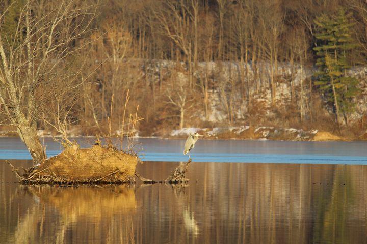 Heron's Winter Solstice - Nina La Marca, Artist's Photography on Artpal