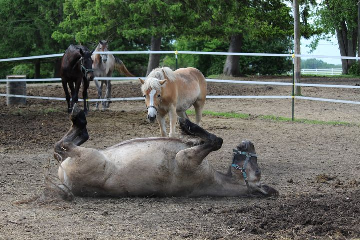 Horses Watch the Rollover - Nina La Marca, Artist's Photography on Artpal