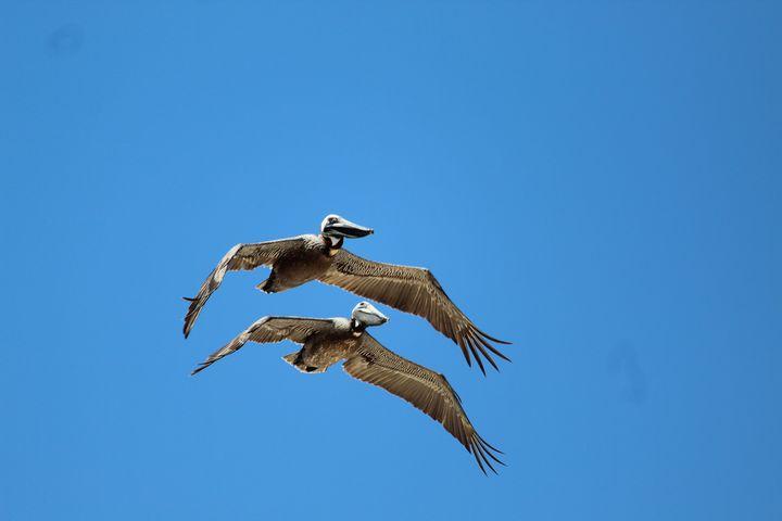 Pelicans Close Up - Nina La Marca, Artist's Photography on Artpal