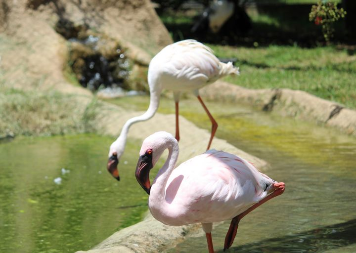 Pink Flamingo, White Flamingo - Nina La Marca, Artist's Photography on Artpal