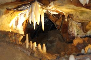 Cavern Fangs