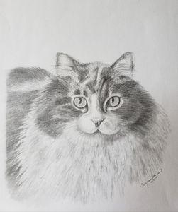 Cerino the Cat