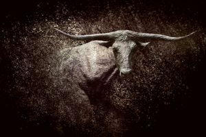 Of The Longhorn