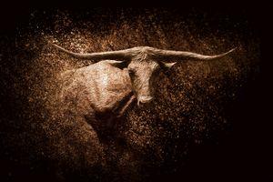 Texas Longhorn: Desert Burn