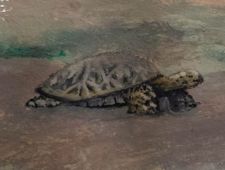 Beached Sea Turtle - Art By Cox