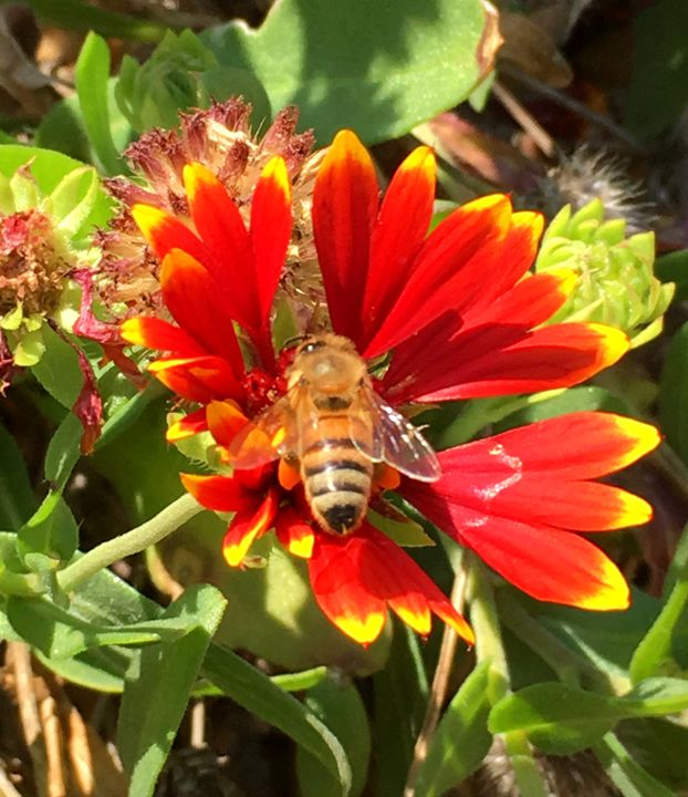 Bee at work - S.Lane